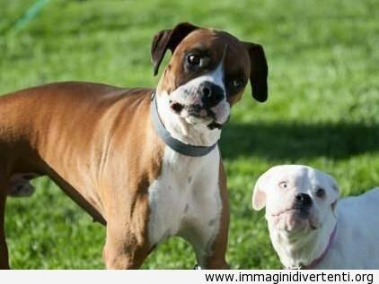 facce-divertenti-dei-cani